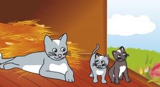 Как разводить котят в 2017 году