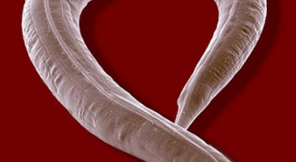 Как эффективно избавиться от паразитов