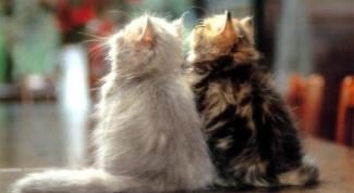 Как вязать котов