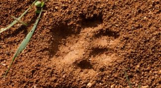 Как нарисовать следы животных