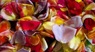 сохранить лепестки роз