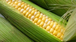 Как варить кукурузу в початках
