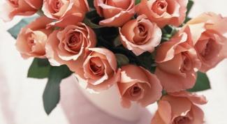 Как сохранить черенки роз