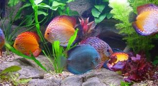 Как сделать освещение для аквариума