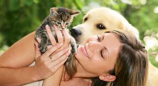 Как защитить животных