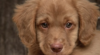 Как выбрать хорошего щенка