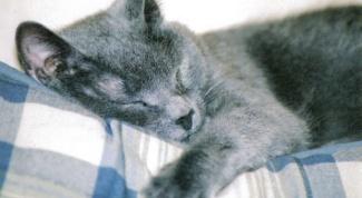 Как лечить отравление у кошек