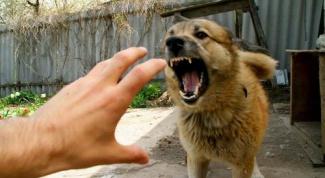 Как отучить собаку бросаться на своих