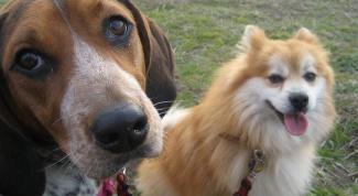 Как помирить собак