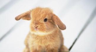 Как отучить кролика грызть обои