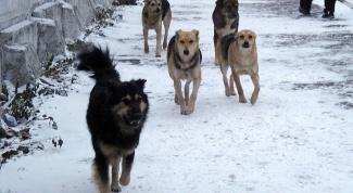 Как избавиться от соседских собак