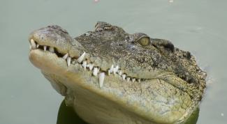 Как сделать маску крокодила