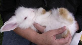 Как мыть декоративных кроликов