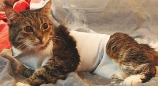 Как сшить попону для кошки