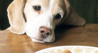 Как отучить собаку от стола