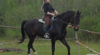 Как научить лошадь сбору