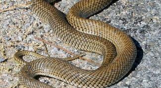 Как уничтожить змей