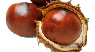 How to grow a chestnut from a fruit