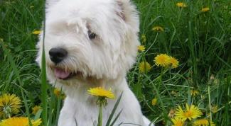 Как следует обучать собаку писать