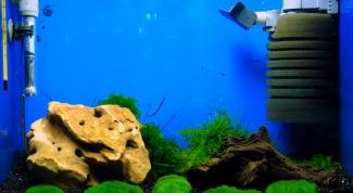 Как менять фильтр у аквариума