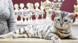 Как оформить родословную кошке
