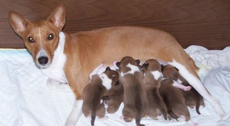 How to understand that dog gives birth