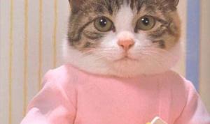 Как шить для котов
