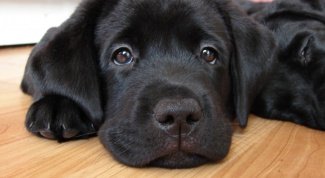 Как делать массаж собаке