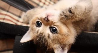 Как приучить котенка пить