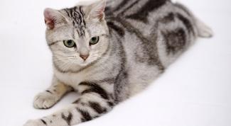 Как определить, что у кота глисты