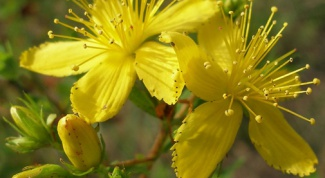 How to take St. John's wort