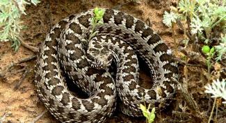 Как отпугивать змей