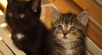 Как назвать питомник кошек
