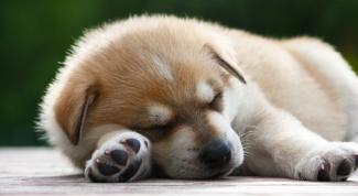 Как приучить щенка оставаться дома
