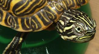 обустроить аквариум для черепахи