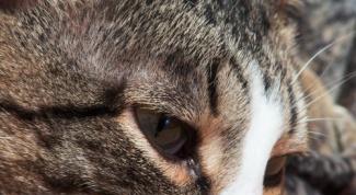 Как лечить насморк у кота