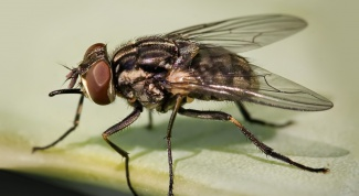 Как вывести мух