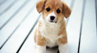 Как уговорить маму завести собаку