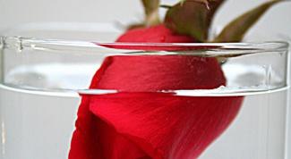Как сохранить розу в воде