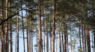 Как взять в аренду лес