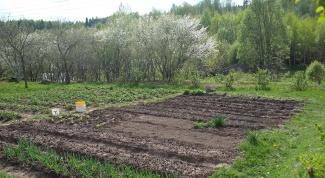 How to deacidify the soil