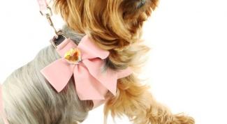 Как сделать бантик для собаки
