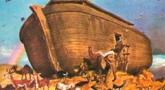 Как построить ковчег