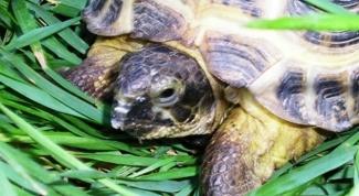 Как перевозить черепах