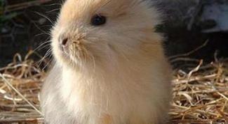 Как приручить декоративного кролика