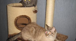 сделать кошачий домик