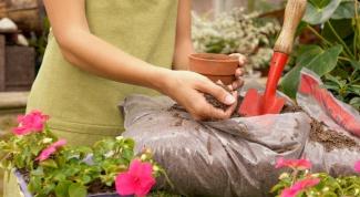 Как удобрять комнатные растения