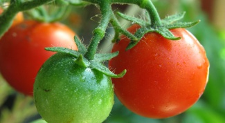 How to water tomatoes