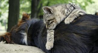 Как подружить кошку и щенка