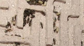 Как сделать муравьиную ферму в 2018 году